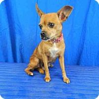 Adopt A Pet :: A025345 - Norman, OK
