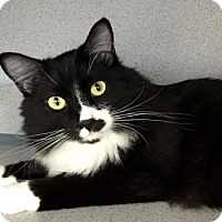 Adopt A Pet :: Marty - Fort Collins, CO