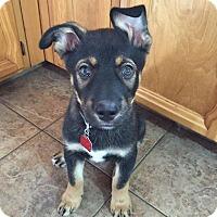 Adopt A Pet :: MAXX - Winnipeg, MB