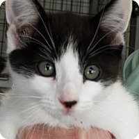Adopt A Pet :: Frosty - Grants Pass, OR