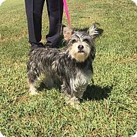 Adopt A Pet :: Kaci - Harrisonburg, VA