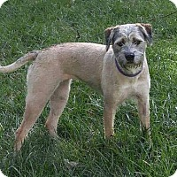 Adopt A Pet :: Cricket - Dayton, OH