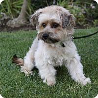 Adopt A Pet :: HAMILTON - Newport Beach, CA