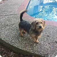 Adopt A Pet :: Harry - Seattle, WA