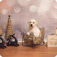 Adopt A Pet :: Peter - Carrollton, TX