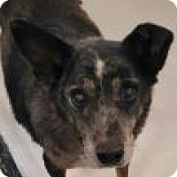 Adopt A Pet :: Rudy - Fort Smith, AR