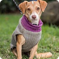 Adopt A Pet :: Keiko - San Diego, CA