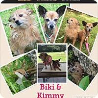 Adopt A Pet :: biki - Homestead, FL