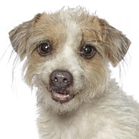 Adopt A Pet :: Gizmo - Fort Lauderdale, FL