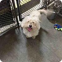 Adopt A Pet :: TROY - San Martin, CA