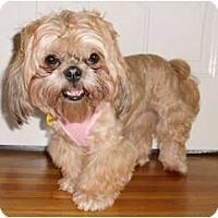 Adopt A Pet :: Ginger - Mooy, AL