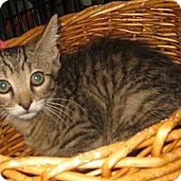 Adopt A Pet :: Mezu - Dallas, TX