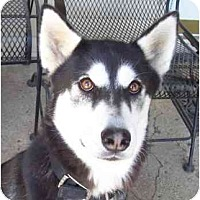 Adopt A Pet :: Sable is a Lover! - Belleville, MI