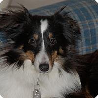 Adopt A Pet :: Kira - Circle Pines, MN
