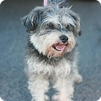 Adopt A Pet :: Fable - Canoga Park, CA