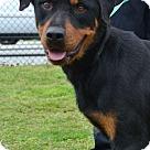 Adopt A Pet :: Glenda