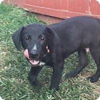 Adopt A Pet :: Oscar - Sinking Spring, PA