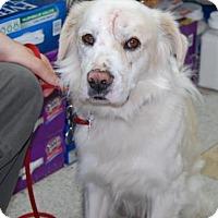 Adopt A Pet :: Everest - Brooklyn, NY