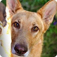 Adopt A Pet :: Olive - Milpitas, CA
