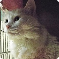 Adopt A Pet :: Snowy - Grants Pass, OR