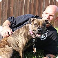 Adopt A Pet :: Kera - Elyria, OH