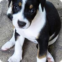 Adopt A Pet :: Adri - Houston, TX