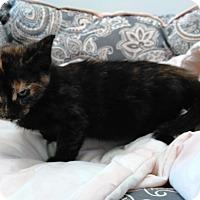 Adopt A Pet :: Reese - Cloquet, MN