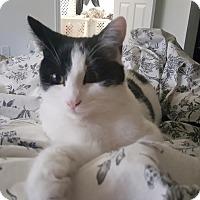 Adopt A Pet :: Jasper - Alamo, CA
