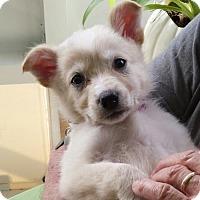 Adopt A Pet :: Martha - Royal Palm Beach, FL