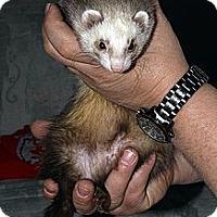 Adopt A Pet :: Rosie - Buxton, ME