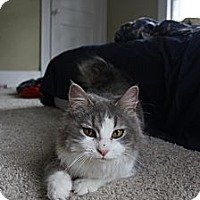 Adopt A Pet :: Cassie - Grand Rapids, MI