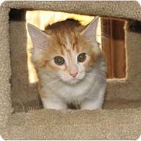 Adopt A Pet :: Fawn - Richfield, OH
