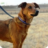 Adopt A Pet :: Belle - Cheyenne, WY