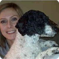 Adopt A Pet :: Preston-Pending! - Grove City, OH