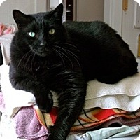 Adopt A Pet :: Blackie - Orillia, ON