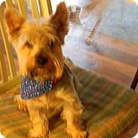 Adopt A Pet :: ranger - cameron, MO