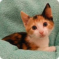 Adopt A Pet :: Lady Emma - Reston, VA