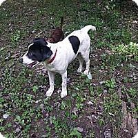 Adopt A Pet :: Balto - Linton, IN