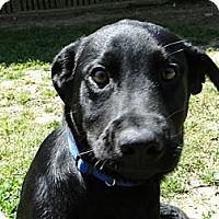 Adopt A Pet :: Massey - Lewisville, IN