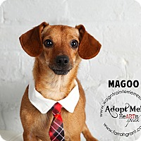 Adopt A Pet :: Magoo - Omaha, NE