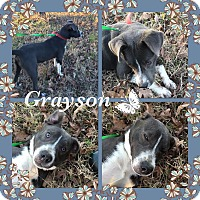 Adopt A Pet :: Grayson meet me 12/18 - East Hartford, CT