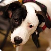 Adopt A Pet :: Sheena - Savannah, GA