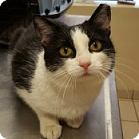 Adopt A Pet :: Adele - McHenry, IL