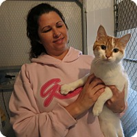 Adopt A Pet :: Perry - Geneseo, IL