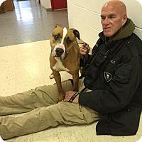 Adopt A Pet :: Abner-Prison Dog - Elyria, OH