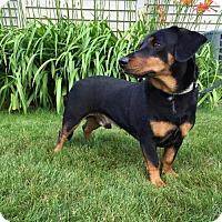Adopt A Pet :: TAZ - Traverse City, MI