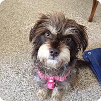 Adopt A Pet :: Mama Cass - Chino Hills - Chino Hills, CA