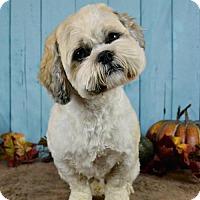 Adopt A Pet :: Boots - Abilene, TX
