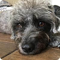 Adopt A Pet :: Petunia - Thousand Oaks, CA