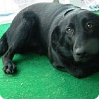 Adopt A Pet :: Francisco - Columbus, NE